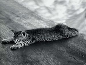 Sleeping-Cat-Wallpaper